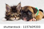 Stock photo kitten and puppy together on white background 1157609203