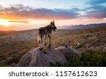 Desert Sunrise Dog