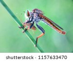 macro insect fauna | Shutterstock . vector #1157633470