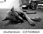 Vagrant Dog Black And White Sad
