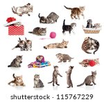 Stock photo active kittens collection little funny cats isolated on white 115767229