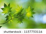 background nature tree  | Shutterstock . vector #1157753116