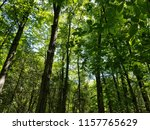 canopy of forest trees on sunny ... | Shutterstock . vector #1157765629