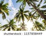 coconut palm tree uprisen view... | Shutterstock . vector #1157858449