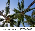 tropical palm trees on hot... | Shutterstock . vector #1157868403