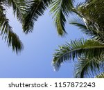 tropical palm trees on hot... | Shutterstock . vector #1157872243