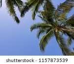 tropical palm trees on hot... | Shutterstock . vector #1157873539