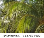tropical palm trees | Shutterstock . vector #1157874409