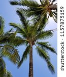 tropical palm trees on hot... | Shutterstock . vector #1157875159