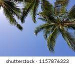 tropical palm trees on hot... | Shutterstock . vector #1157876323