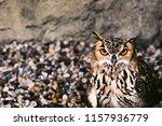 portrait for indian eagle owl ... | Shutterstock . vector #1157936779