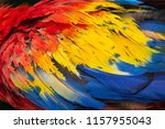 a close up of the colorful red  ... | Shutterstock . vector #1157955043