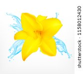 lily with water splash. vector... | Shutterstock .eps vector #1158012430