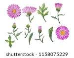 watercolor hand painted flowers.... | Shutterstock . vector #1158075229