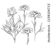 beautiful hand drawn bouquet of ... | Shutterstock . vector #1158104713