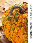 Closeup Of A Warty Pumpkin On ...