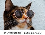 Stock photo funny cat in round sunglasses close up 1158137110