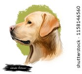 labrador retriever portrait of... | Shutterstock . vector #1158146560