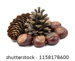 pinecones and chestnuts... | Shutterstock . vector #1158178600