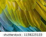 texture of parrot feathers | Shutterstock . vector #1158225133