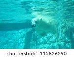 Polar Bear Swimming Under Wate...