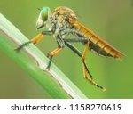 macro fauna insect | Shutterstock . vector #1158270619