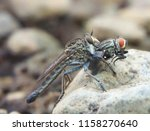 macro fauna insect | Shutterstock . vector #1158270640