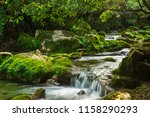Small photo of A stream in the forest flows over mossy rocks