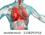 pneumonia medical concept  3d... | Shutterstock . vector #1158291916