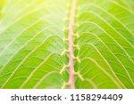 green leaf macro. green fresh... | Shutterstock . vector #1158294409