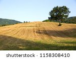 lonely tree in the field.... | Shutterstock . vector #1158308410