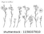 forget me not flowers vector... | Shutterstock .eps vector #1158337810