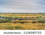 king penguins at tierra del... | Shutterstock . vector #1158385753