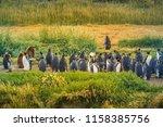 king penguins at tierra del... | Shutterstock . vector #1158385756