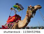 decorated indian camel for the... | Shutterstock . vector #1158452986