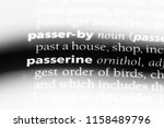 passerine word in a dictionary. ...   Shutterstock . vector #1158489796