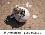 common tortoise baby is... | Shutterstock . vector #1158503119