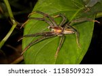 big spider photographed around... | Shutterstock . vector #1158509323