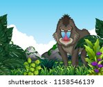 Mandrill Baboon In The Forest...