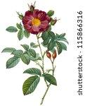 flower illustration | Shutterstock . vector #115866316