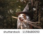 cute dog in witch hat holding... | Shutterstock . vector #1158680050