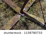 Small photo of A small purple flower growing next to an old forgotten rusty and mossy anchor at a natural harbor