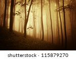 autumn in forest at sunset | Shutterstock . vector #115879270