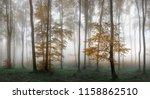 Autumn Foggy Forest. Balkan...