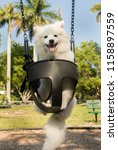 Stock photo cute dog on a swing 1158897559