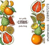 citrus collection. hand drawn... | Shutterstock .eps vector #1158907273