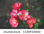 close up with flower | Shutterstock . vector #1158935800