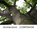 close up with a tree | Shutterstock . vector #1158936436