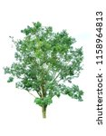 tree isolated on a white... | Shutterstock . vector #1158964813