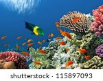 tropical fish on coral reef in... | Shutterstock . vector #115897093